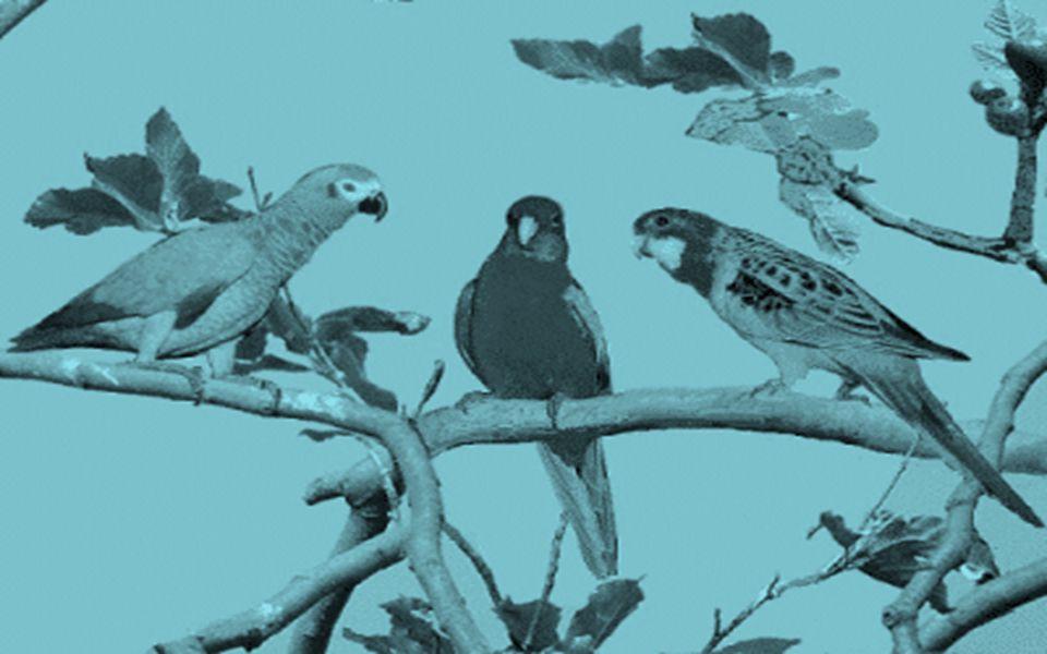 Só por hoje, abra a janela do seu coração e aguce seus ouvidos ao chamamento da felicidade do canto dos pássaros...