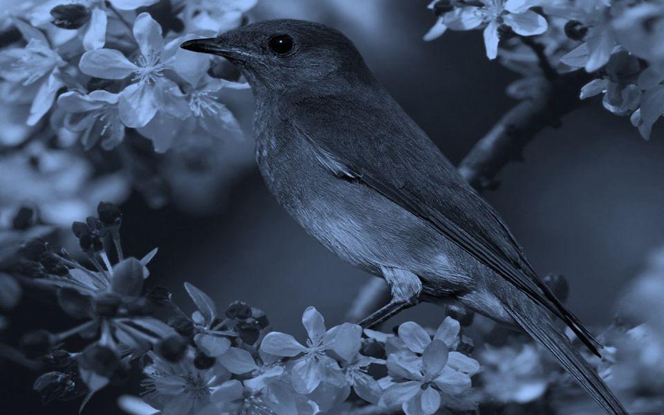 Perceba que a felicidade dos pássaros independe dos acontecimentos a sua volta, simplesmente cantam e sentem-se bem... Diferente de nós que para sermo
