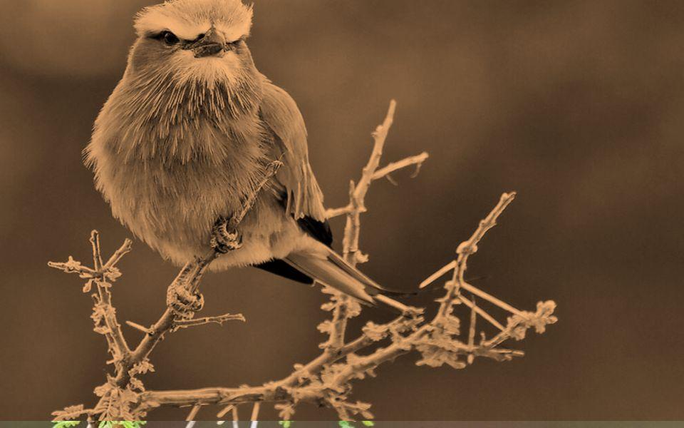 Ouça mais o som dos pássaros e reflita o que eles fazem para cantarolar todos os dias todas as manhãs e porque são eternamente felizes...