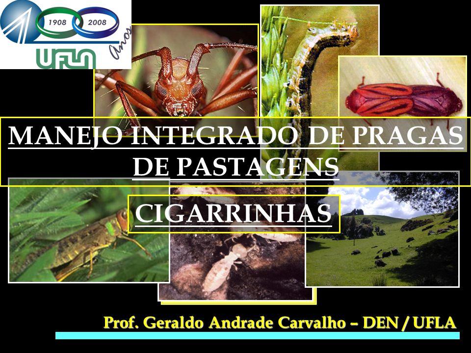 MANEJO INTEGRADO DE PRAGAS DE PASTAGENS Prof. Geraldo Andrade Carvalho – DEN / UFLA CIGARRINHAS