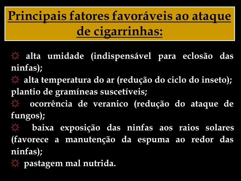 Principais fatores favoráveis ao ataque de cigarrinhas: ☼ alta umidade (indispensável para eclosão das ninfas); ☼ alta temperatura do ar (redução do c