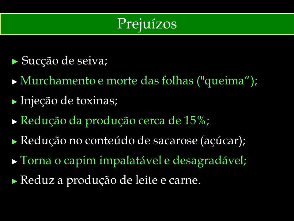Prejuízos ► Sucção de seiva; ► Murchamento e morte das folhas (