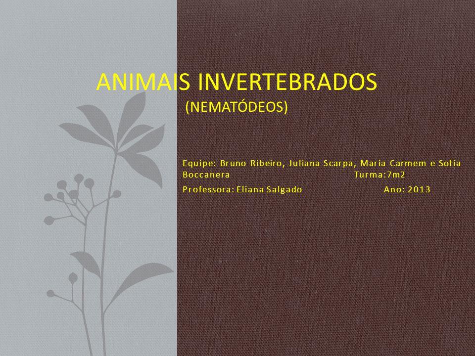 Equipe: Bruno Ribeiro, Juliana Scarpa, Maria Carmem e Sofia Boccanera Turma:7m2 Professora: Eliana Salgado Ano: 2013 ANIMAIS INVERTEBRADOS (NEMATÓDEOS)