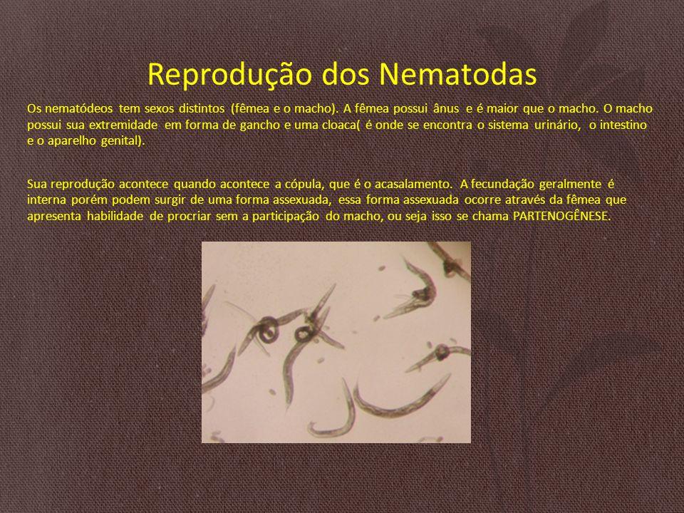 Reprodução dos Nematodas Os nematódeos tem sexos distintos (fêmea e o macho).