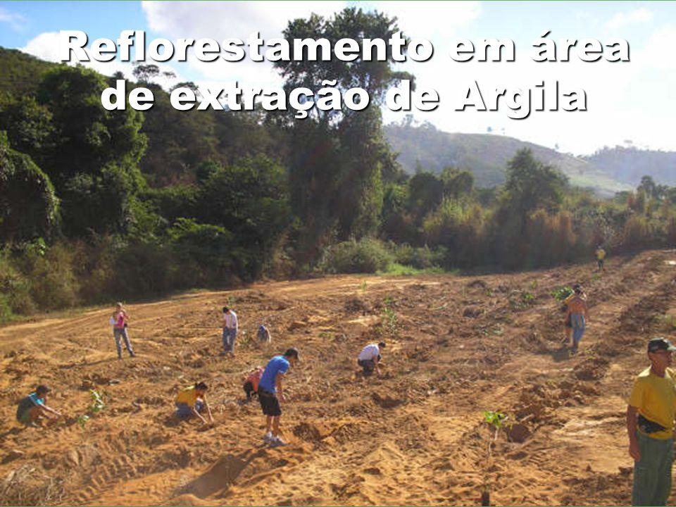 Reflorestamento em área de extração de Argila