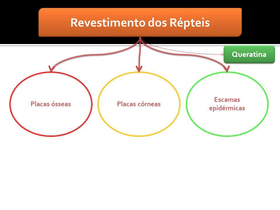Revestimento dos Répteis Placas ósseasPlacas córneas Escamas epidérmicas Queratina