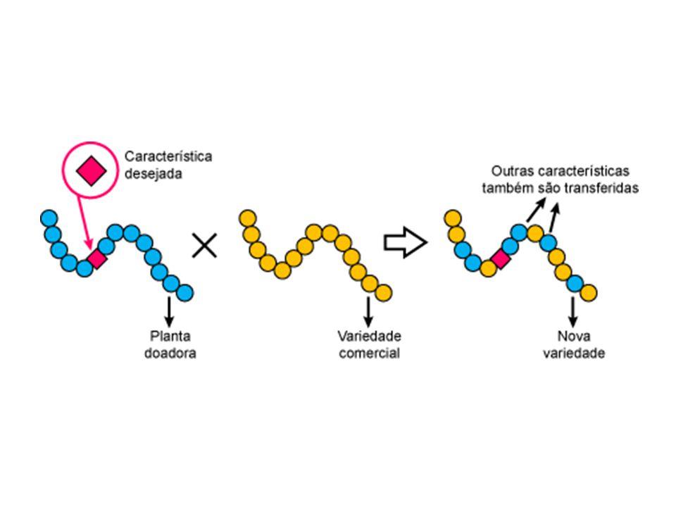 Em 2002, cientistas descobriram que um dos genes desconhecido codifica RNA, pode portanto estar a produzir proteínas desconhecidas.