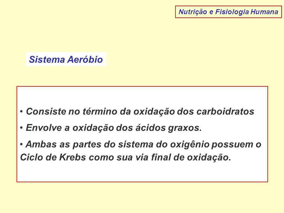 Nutrição e Fisiologia Humana Sistema Aeróbio Consiste no término da oxidação dos carboidratos Envolve a oxidação dos ácidos graxos. Ambas as partes do