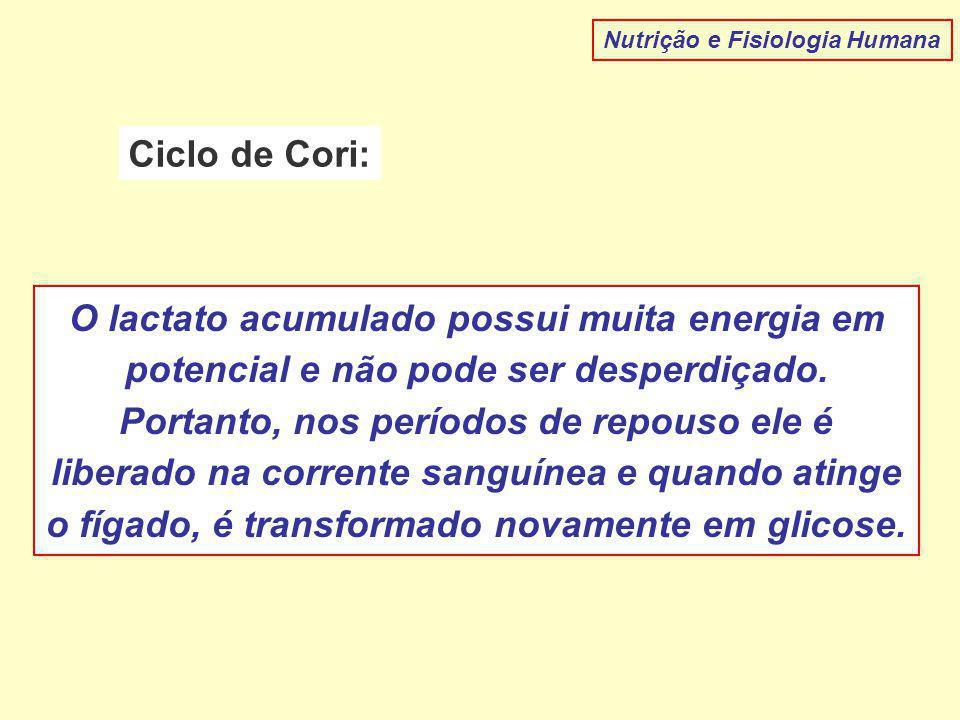 Nutrição e Fisiologia Humana Ciclo de Cori: O lactato acumulado possui muita energia em potencial e não pode ser desperdiçado.