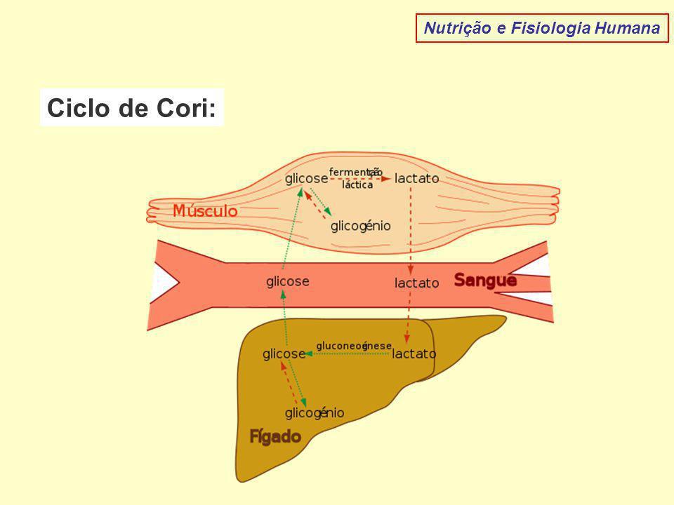 Nutrição e Fisiologia Humana Ciclo de Cori: