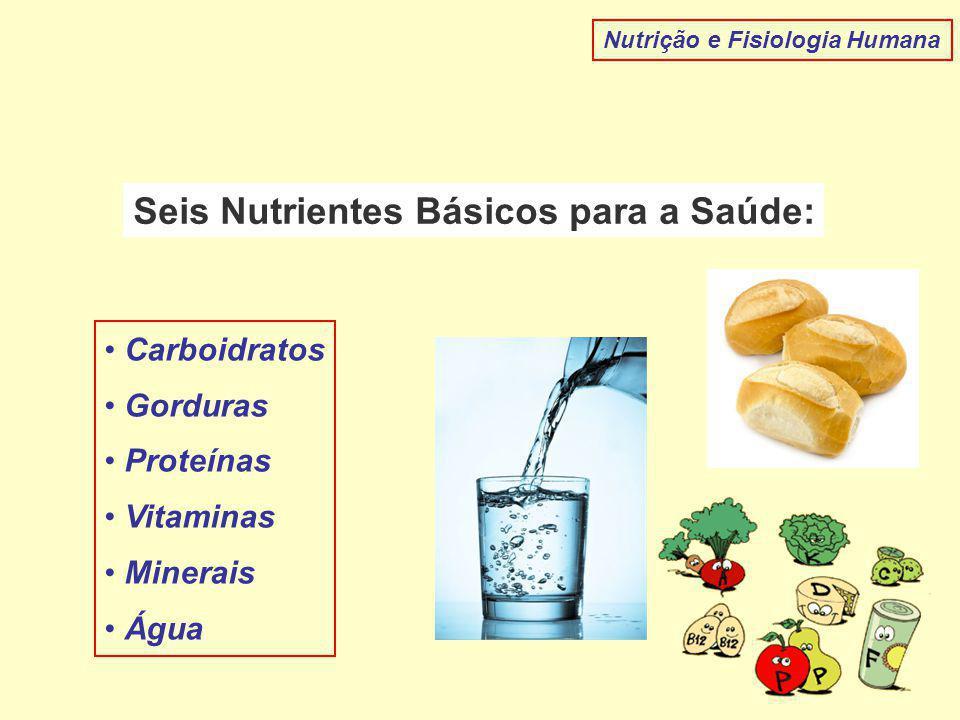 Nutrição e Fisiologia Humana Seis Nutrientes Básicos para a Saúde: Carboidratos Gorduras Proteínas Vitaminas Minerais Água