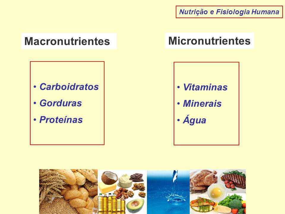Macronutrientes Micronutrientes Carboidratos Gorduras Proteínas Vitaminas Minerais Água Nutrição e Fisiologia Humana