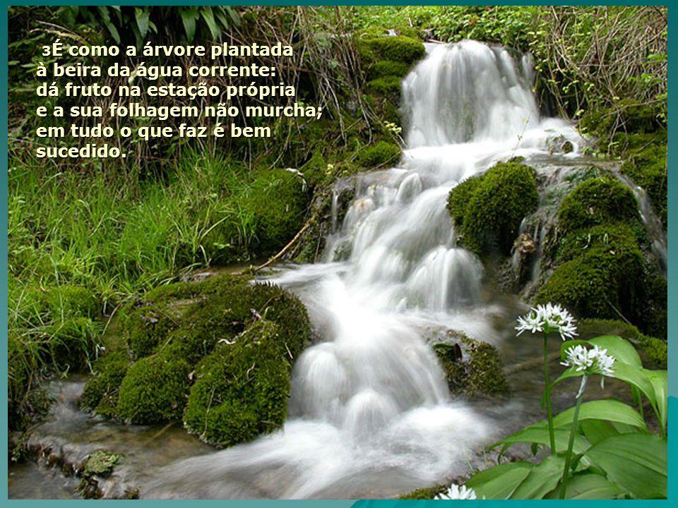 3 É como a árvore plantada à beira da água corrente: dá fruto na estação própria e a sua folhagem não murcha; em tudo o que faz é bem sucedido.