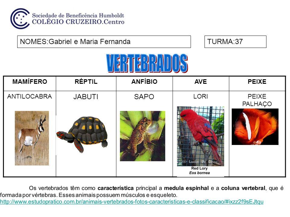 MAMÍFERORÉPTILANFÍBIOAVEPEIXE ANTILOCABRA JABUTISAPO LORIPEIXE PALHAÇO NOMES:Gabriel e Maria FernandaTURMA:37 Os vertebrados têm como característica p