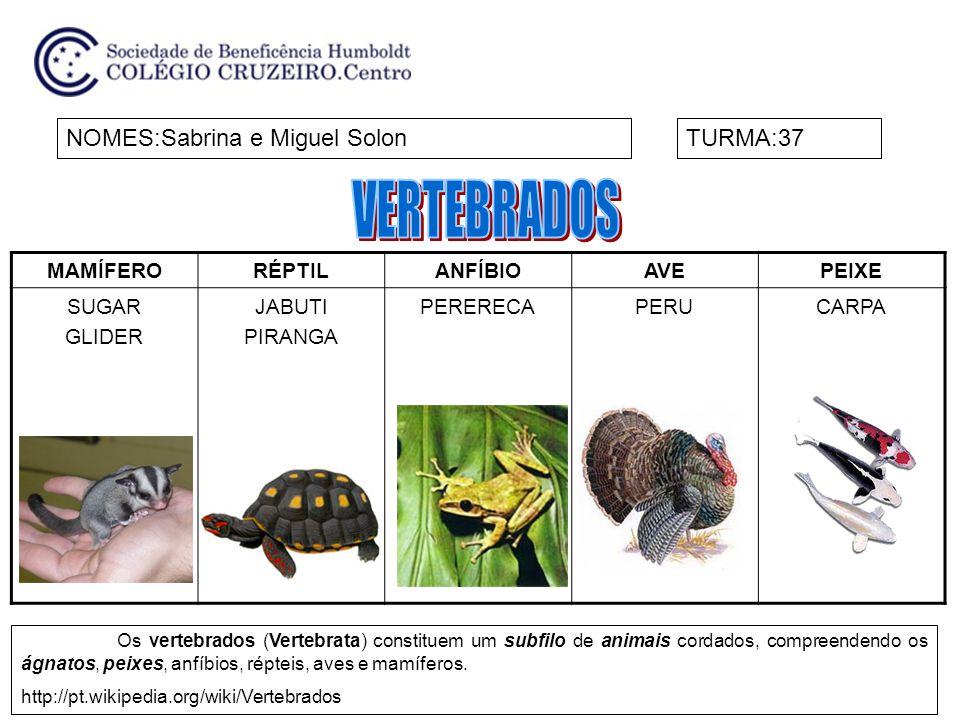 MAMÍFERORÉPTILANFÍBIOAVEPEIXE SUGAR GLIDER JABUTI PIRANGA PERERECAPERUCARPA NOMES:Sabrina e Miguel SolonTURMA:37 Os vertebrados (Vertebrata) constitue
