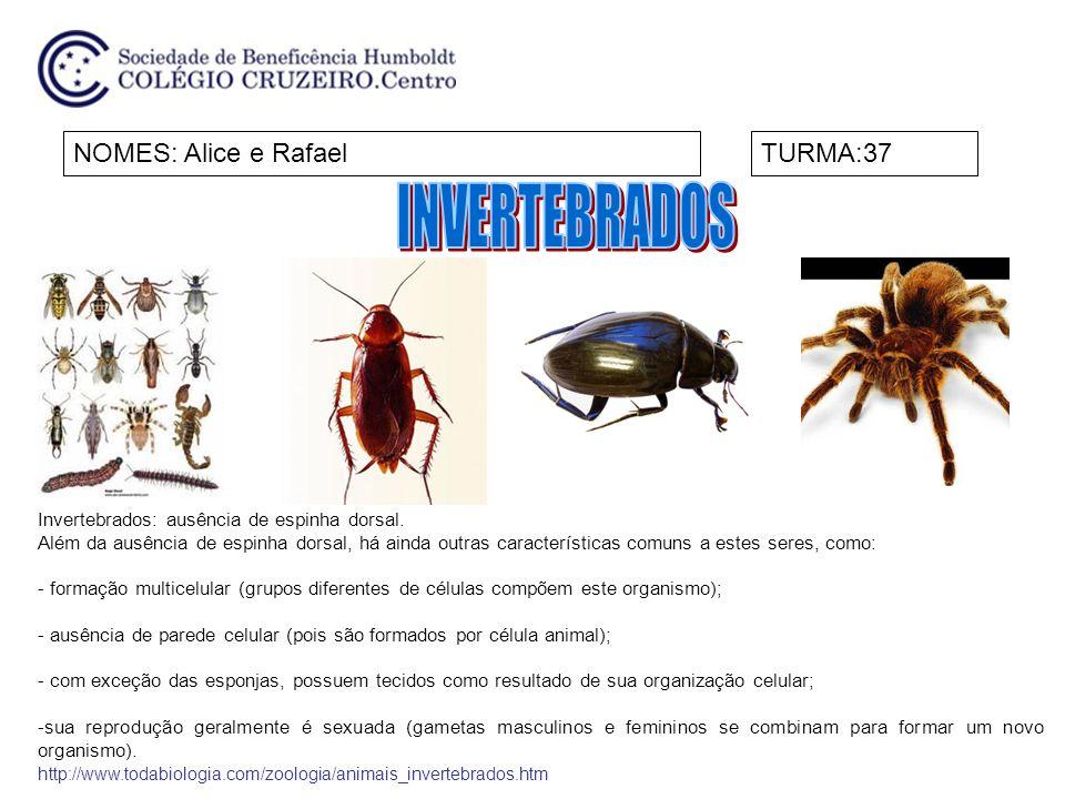 NOMES: Alice e RafaelTURMA:37 Invertebrados: ausência de espinha dorsal. Além da ausência de espinha dorsal, há ainda outras características comuns a