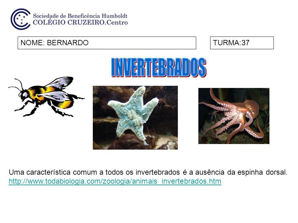 NOME: BERNARDOTURMA:37 Uma característica comum a todos os invertebrados é a ausência da espinha dorsal. http://www.todabiologia.com/zoologia/animais_