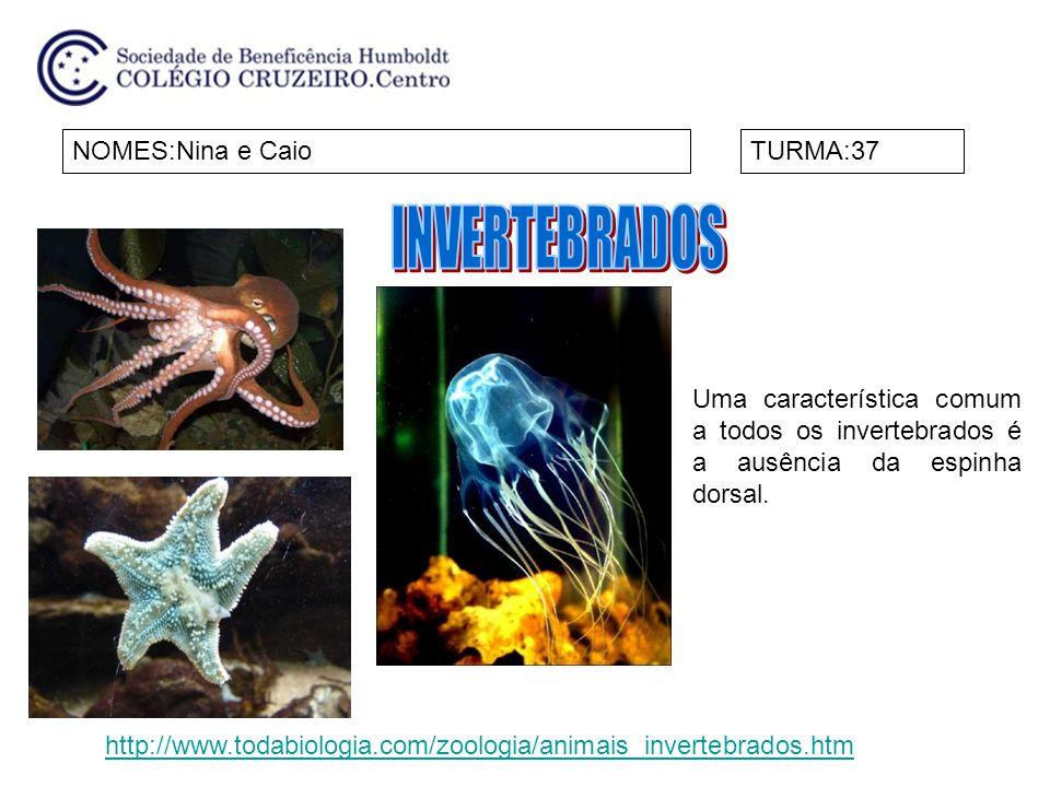 NOMES:Nina e CaioTURMA:37 Uma característica comum a todos os invertebrados é a ausência da espinha dorsal. http://www.todabiologia.com/zoologia/anima