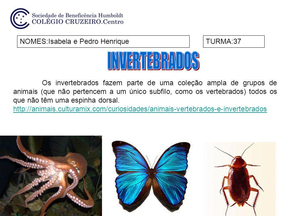NOMES:Isabela e Pedro HenriqueTURMA:37 Os invertebrados fazem parte de uma coleção ampla de grupos de animais (que não pertencem a um único subfilo, c