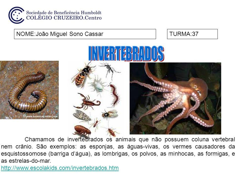 NOME:João Miguel Sono CassarTURMA:37 Chamamos de invertebrados os animais que não possuem coluna vertebral nem crânio. São exemplos: as esponjas, as á