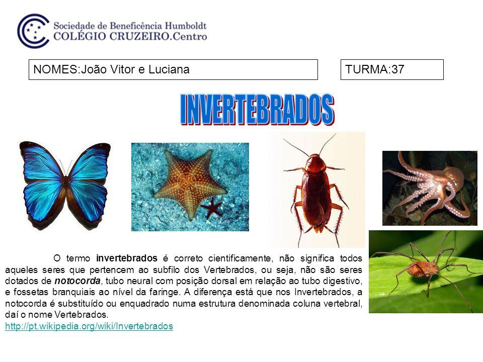NOMES:João Vitor e LucianaTURMA:37 O termo invertebrados é correto cientificamente, não significa todos aqueles seres que pertencem ao subfilo dos Ver