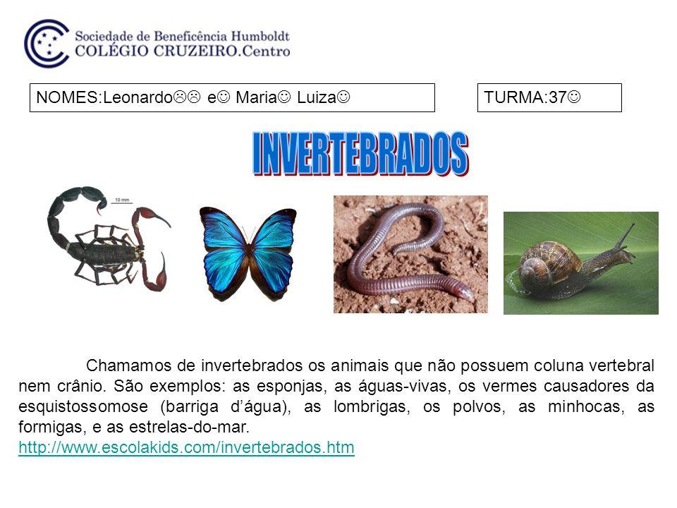 NOMES:Leonardo  e Maria Luiza TURMA:37 Chamamos de invertebrados os animais que não possuem coluna vertebral nem crânio. São exemplos: as esponjas,