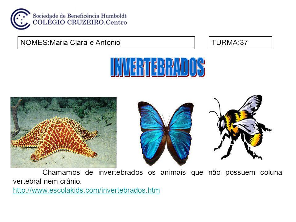 NOMES:Maria Clara e AntonioTURMA:37 Chamamos de invertebrados os animais que não possuem coluna vertebral nem crânio. http://www.escolakids.com/invert