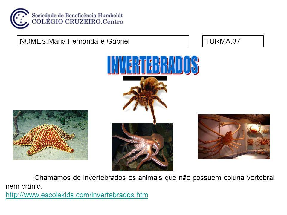 NOMES:Maria Fernanda e GabrielTURMA:37 Chamamos de invertebrados os animais que não possuem coluna vertebral nem crânio. http://www.escolakids.com/inv