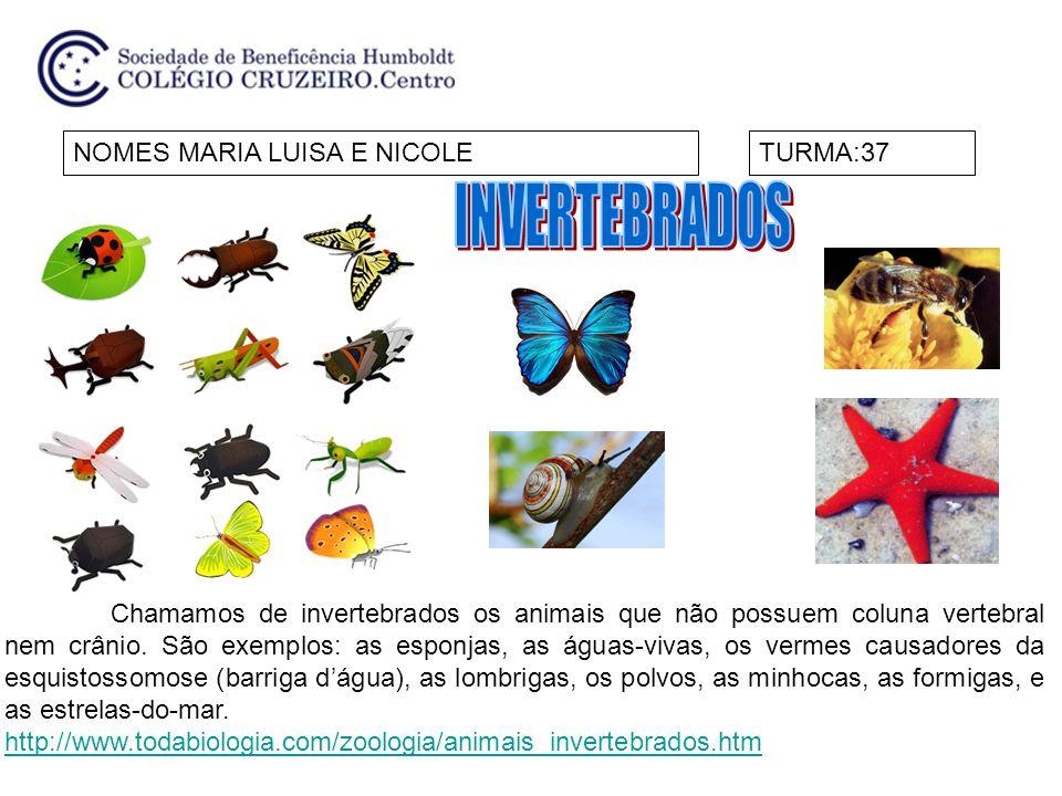 NOMES MARIA LUISA E NICOLETURMA:37 Chamamos de invertebrados os animais que não possuem coluna vertebral nem crânio. São exemplos: as esponjas, as águ