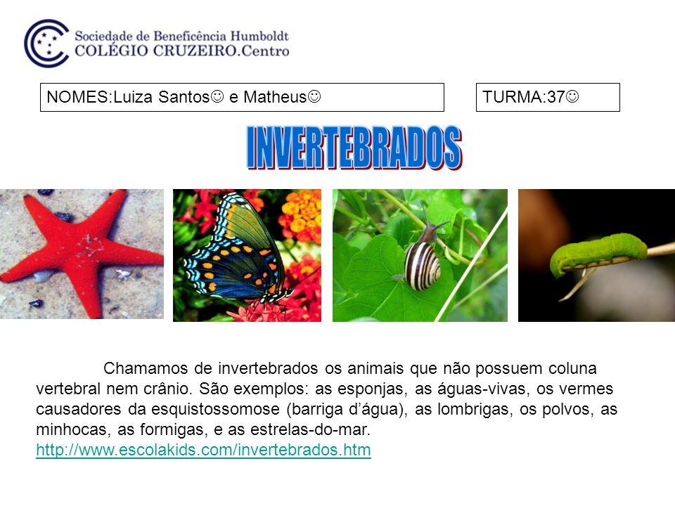 NOMES:Luiza Santos e Matheus TURMA:37 Chamamos de invertebrados os animais que não possuem coluna vertebral nem crânio. São exemplos: as esponjas, as