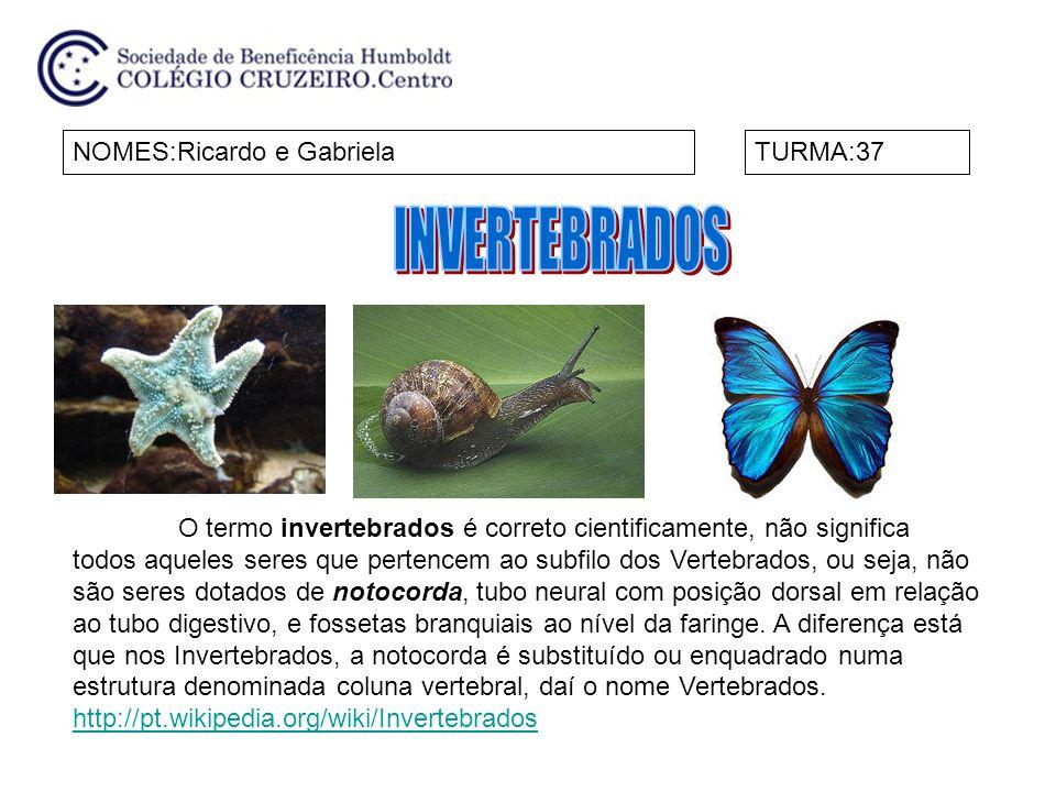 NOMES:Ricardo e GabrielaTURMA:37 O termo invertebrados é correto cientificamente, não significa todos aqueles seres que pertencem ao subfilo dos Verte
