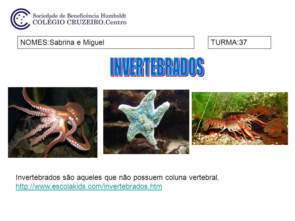 NOMES:Sabrina e MiguelTURMA:37 Invertebrados são aqueles que não possuem coluna vertebral. http://www.escolakids.com/invertebrados.htm
