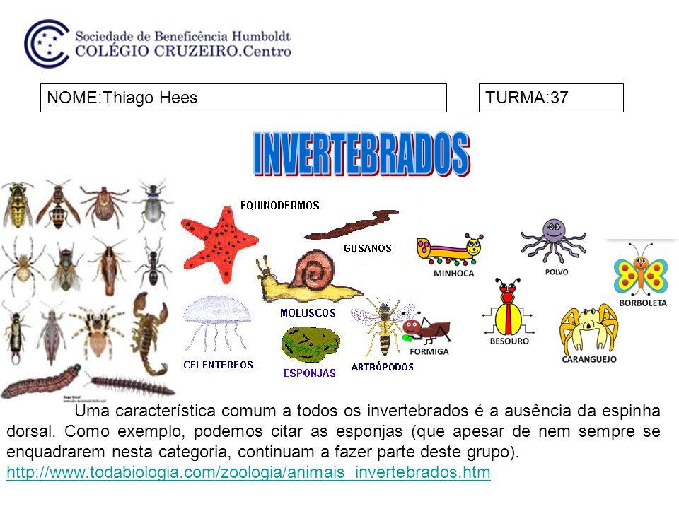 NOME:Thiago HeesTURMA:37 Uma característica comum a todos os invertebrados é a ausência da espinha dorsal. Como exemplo, podemos citar as esponjas (qu