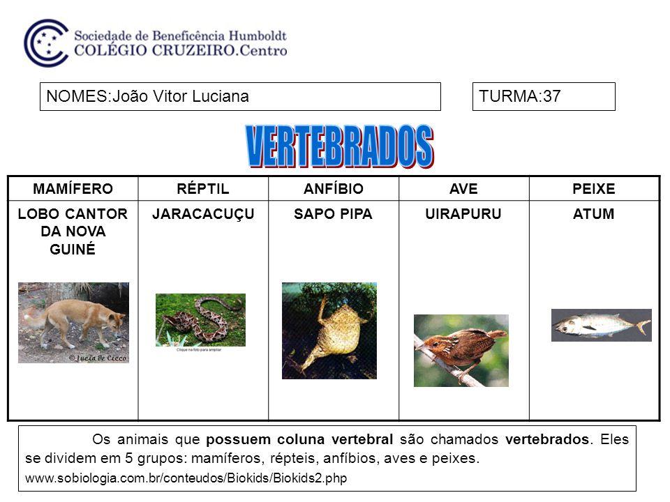 MAMÍFERORÉPTILANFÍBIOAVEPEIXE LOBO CANTOR DA NOVA GUINÉ JARACACUÇUSAPO PIPAUIRAPURUATUM NOMES:João Vitor LucianaTURMA:37 Os animais que possuem coluna