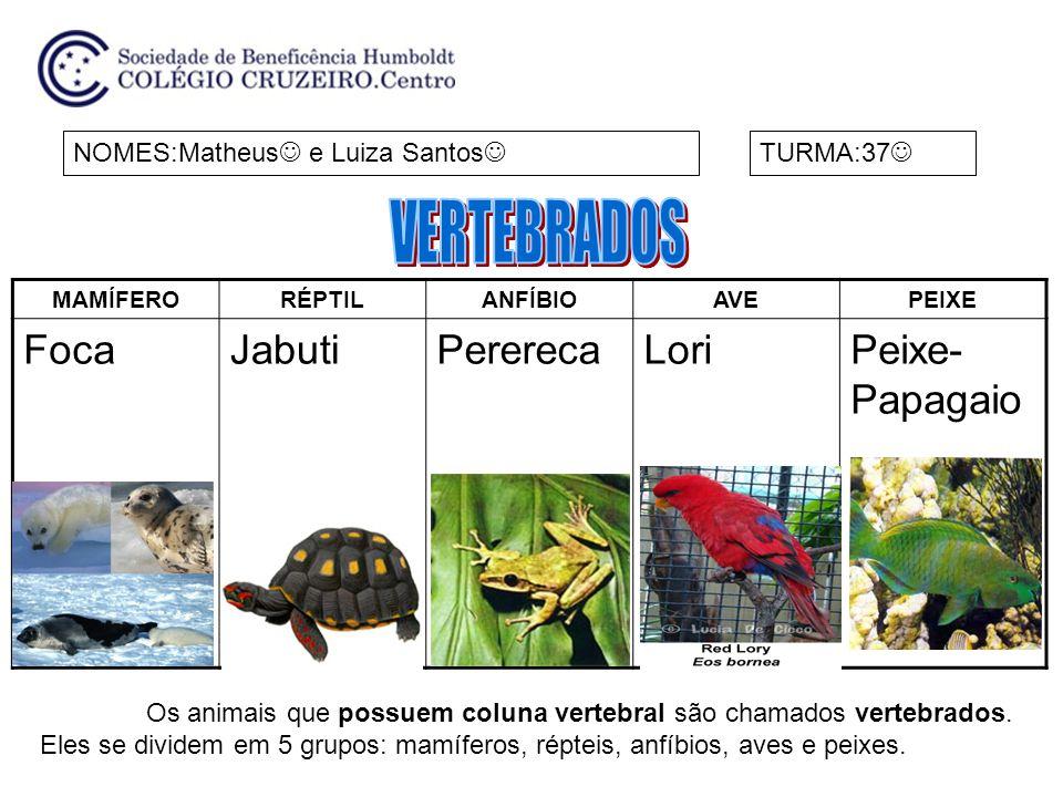 MAMÍFERORÉPTILANFÍBIOAVEPEIXE FocaJabutiPererecaLoriPeixe- Papagaio NOMES:Matheus e Luiza Santos TURMA:37 Os animais que possuem coluna vertebral são