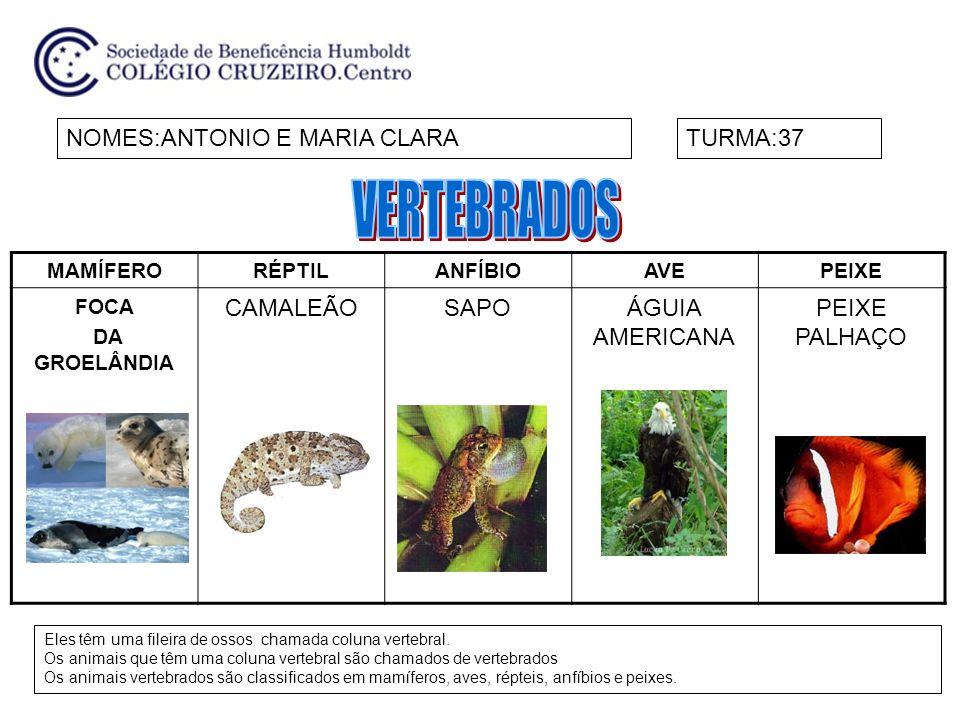 MAMÍFERORÉPTILANFÍBIOAVEPEIXE FOCA DA GROELÂNDIA CAMALEÃOSAPOÁGUIA AMERICANA PEIXE PALHAÇO NOMES:ANTONIO E MARIA CLARATURMA:37 Eles têm uma fileira de