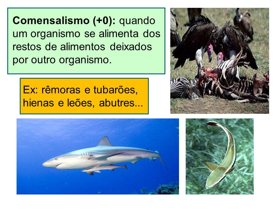 Comensalismo (+0): quando um organismo se alimenta dos restos de alimentos deixados por outro organismo. Ex: rêmoras e tubarões, hienas e leões, abutr