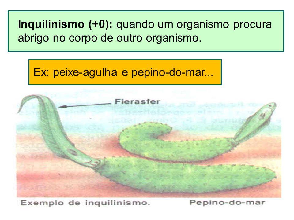 Inquilinismo (+0): quando um organismo procura abrigo no corpo de outro organismo. Ex: peixe-agulha e pepino-do-mar...