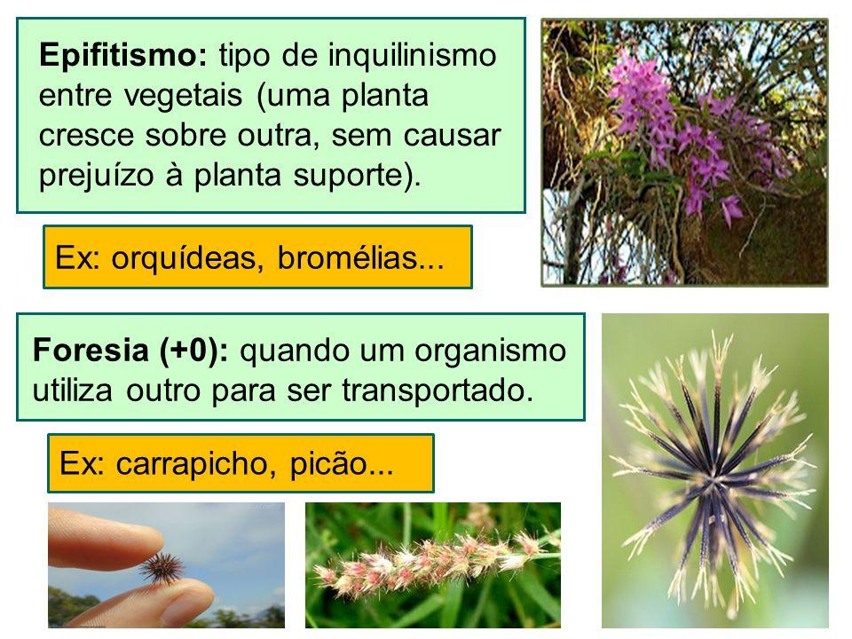 Epifitismo: tipo de inquilinismo entre vegetais (uma planta cresce sobre outra, sem causar prejuízo à planta suporte). Ex: orquídeas, bromélias... For