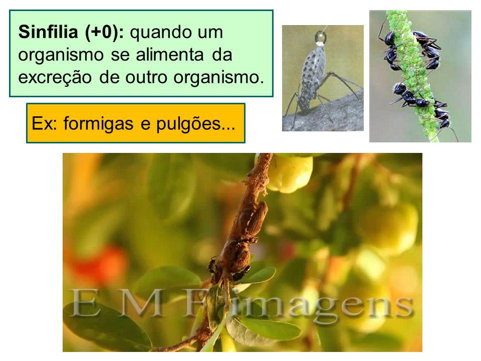 Sinfilia (+0): quando um organismo se alimenta da excreção de outro organismo. Ex: formigas e pulgões...