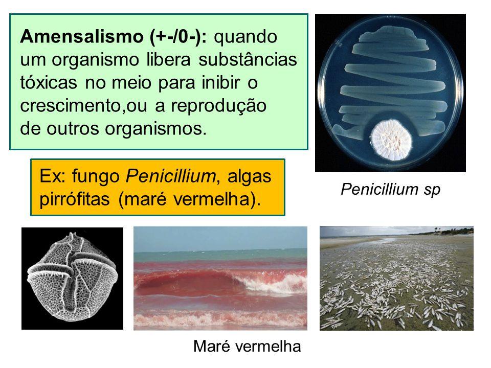 Amensalismo (+-/0-): quando um organismo libera substâncias tóxicas no meio para inibir o crescimento,ou a reprodução de outros organismos. Ex: fungo