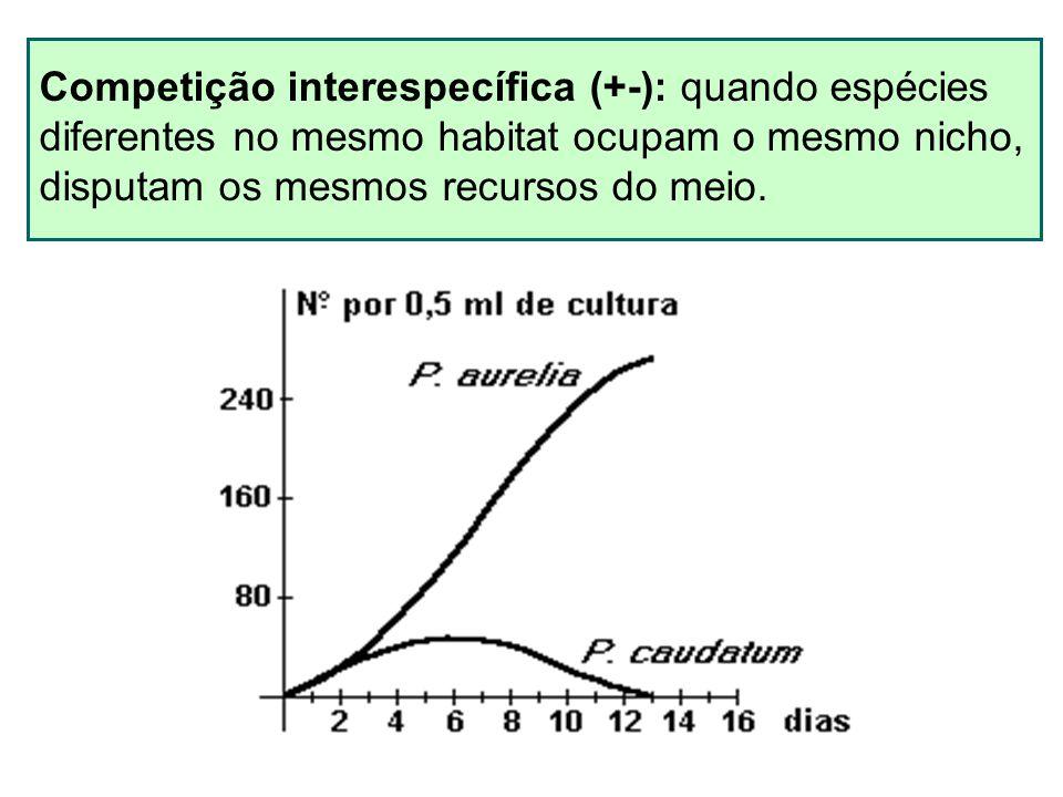 Competição interespecífica (+-): quando espécies diferentes no mesmo habitat ocupam o mesmo nicho, disputam os mesmos recursos do meio.