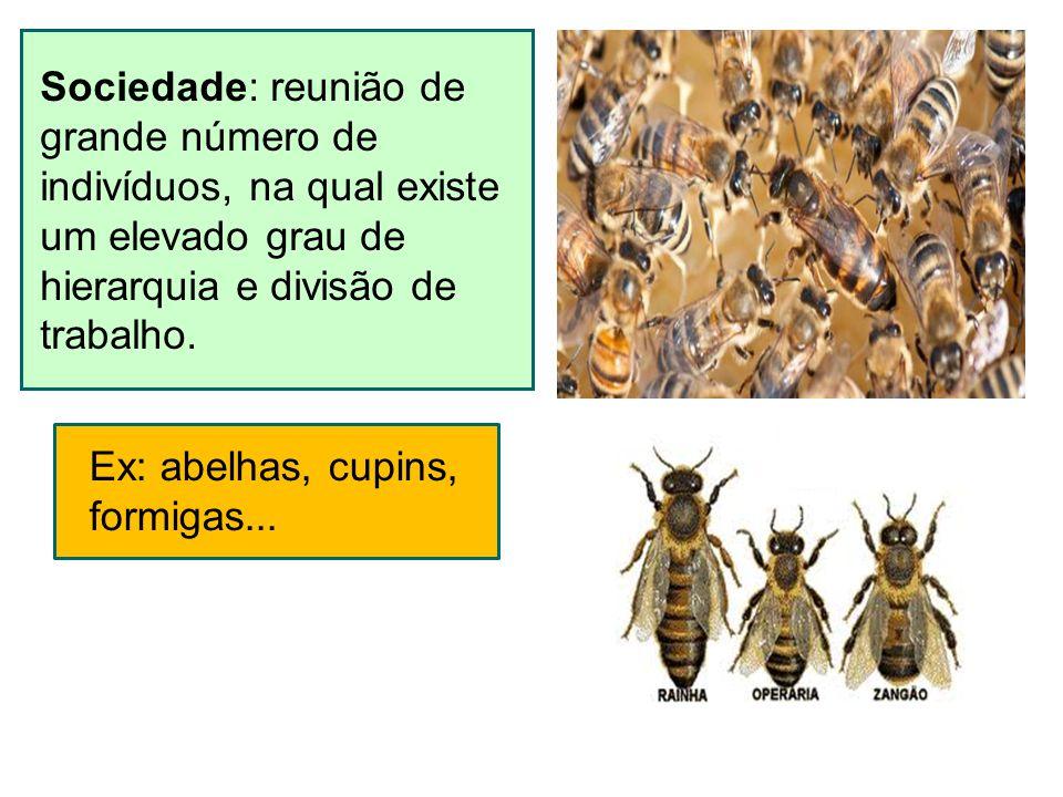 Sociedade: reunião de grande número de indivíduos, na qual existe um elevado grau de hierarquia e divisão de trabalho. Ex: abelhas, cupins, formigas..