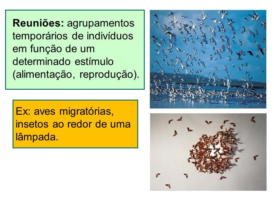 Reuniões: agrupamentos temporários de indivíduos em função de um determinado estímulo (alimentação, reprodução). Ex: aves migratórias, insetos ao redo