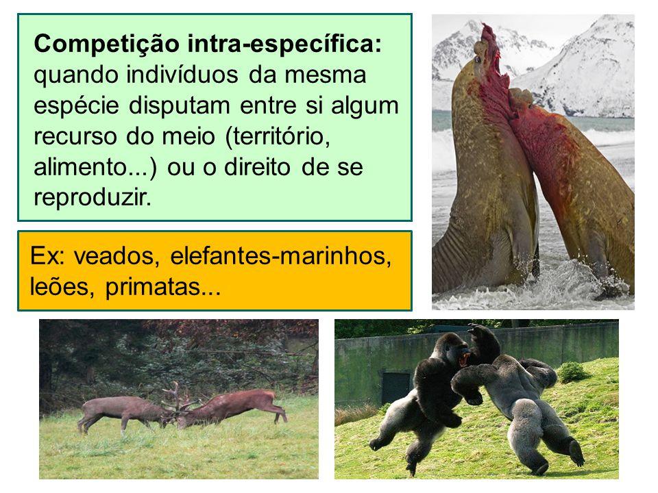 Competição intra-específica: quando indivíduos da mesma espécie disputam entre si algum recurso do meio (território, alimento...) ou o direito de se r
