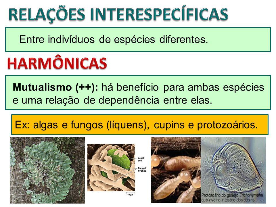 Entre indivíduos de espécies diferentes. Mutualismo (++): há benefício para ambas espécies e uma relação de dependência entre elas. Ex: algas e fungos