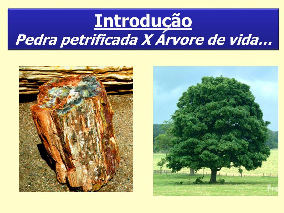 Introdução Pedra petrificada X Árvore de vida… Introdução Pedra petrificada X Árvore de vida…
