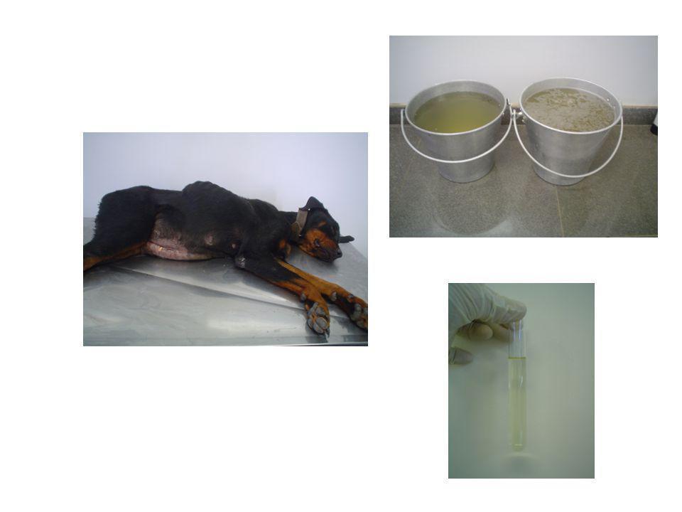 DIAGNÓSTICO  ALT (normal ou aumentada)  Proteína Plasmática Total (albumina)  Rx (  no tamanho do órgão, difícil no animal com ascite)  Ultra-som