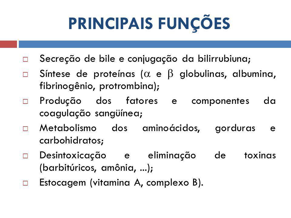PRINCIPAIS FUNÇÕES  Secreção de bile e conjugação da bilirrubiuna;  Síntese de proteínas (  e  globulinas, albumina, fibrinogênio, protrombina);  Produção dos fatores e componentes da coagulação sangüínea;  Metabolismo dos aminoácidos, gorduras e carbohidratos;  Desintoxicação e eliminação de toxinas (barbitúricos, amônia,...);  Estocagem (vitamina A, complexo B).