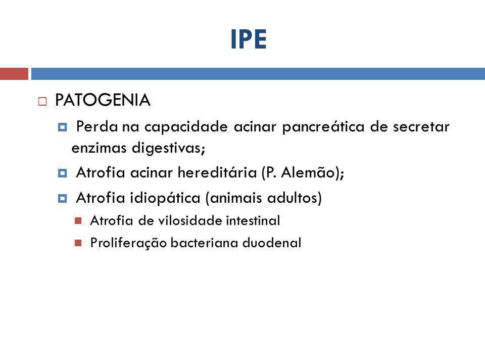 IPE  PATOGENIA  Perda na capacidade acinar pancreática de secretar enzimas digestivas;  Atrofia acinar hereditária (P. Alemão);  Atrofia idiopátic